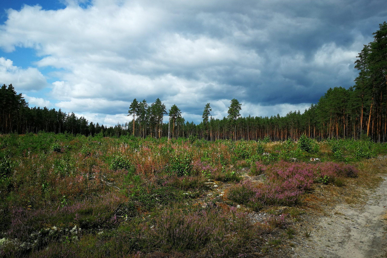 Jour 56 – De Valka à Valga