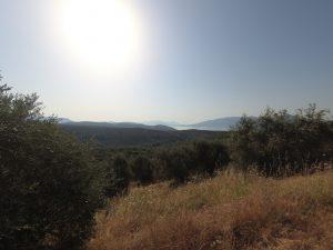 Jour 6 – On grimpe dans les collines d'oliviers