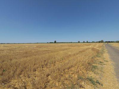 Des champs à perte de vue